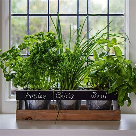 Indoor Windowsill Herb Garden garden planter box wooden indoor herb kit kitchen seeds