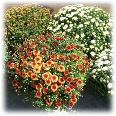 gardening123 your resource for plant lawn and