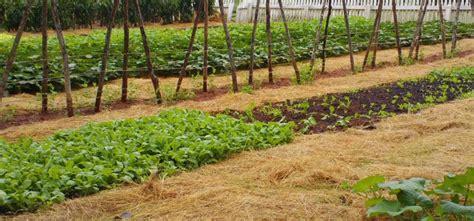 Looking Between the Beds: Vegetable Garden Pathways
