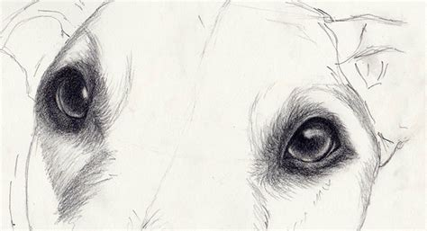 draw realistic puppy how to draw that look amazingly realistic