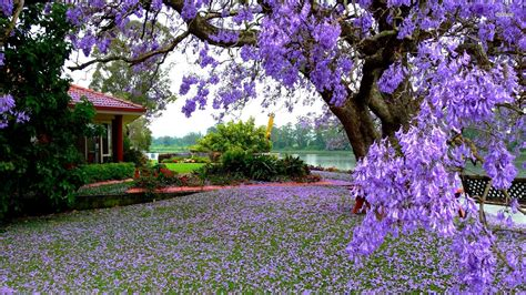 purple flower garden flower garden wallpapers best wallpapers