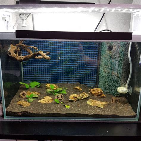 Aquarium L 25 Liter 25 liter aquascape test becken galerie der wirbellotse
