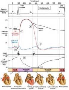 cardiac cycle at florida atlantic university studyblue