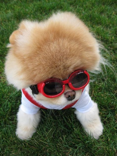 the cutest puppy on earth the cutest on earth crystalphuong singapore fashion and travel