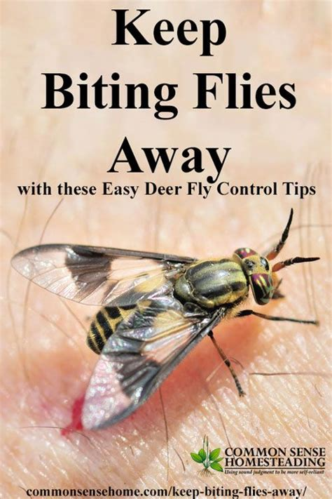 how to keep flies away from backyard best 899 homesteading images on pinterest gardening