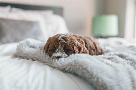 stanze da letto da sogno stanze da letto da sogno 5 ispirazioni ti lasceranno