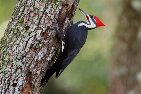 woodpecker go travel easy