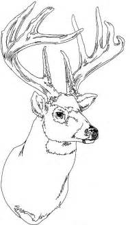 Buck Deer Coloring Pages Images &amp Pictures  Becuo sketch template