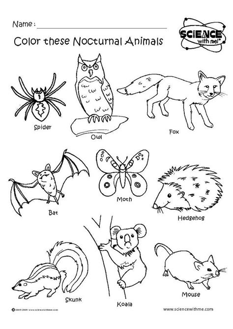 wild animals coloring pages preschool 162 best nocturnal animals images on pinterest wild
