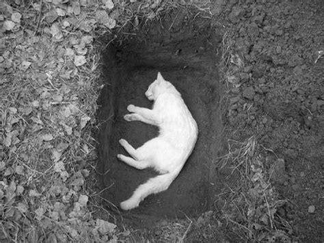 swing a dead cat origin cat funeral sad cats graves sadness pinterest