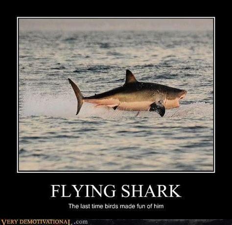 Baby Shark Jokes | 17 best images about shark jokes on pinterest smosh