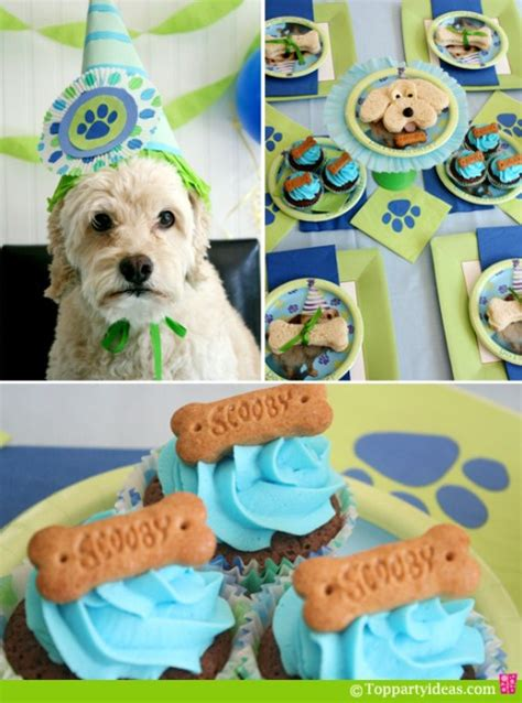 Birthday Surprises For Your Pet by Birthday Ideas