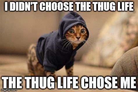 Memes On Life - top 26 thug life cat memes thug life meme