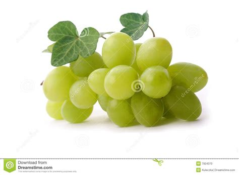 imagenes de uvas vector uva verde foto de stock imagem 7924370