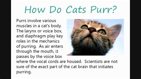 why does a a why do cats purr 101