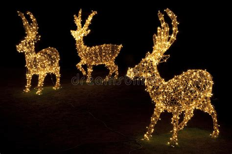 illuminate per natale renne illuminate per natale fotografia stock immagine di