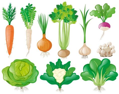 vegetables vector different types of vegetables vector free