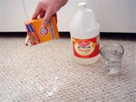 stains pets and carpet cleaners on