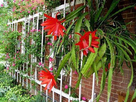giardini piante grasse per esterno piante grasse da giardino piante grasse piante grasse