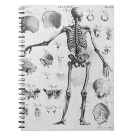 11 car 225 tulas para cuadernos de anatom 237 a car 225 tulas para cuadernos