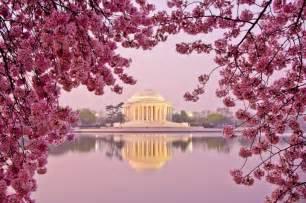 cherry blossom festival dc tips for visiting the dc cherry blossom festival