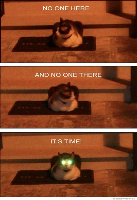Laser Cat Meme - demon cat weknowmemes