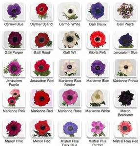 flowers by color anemones from hyperactive farms flirty fleurs the