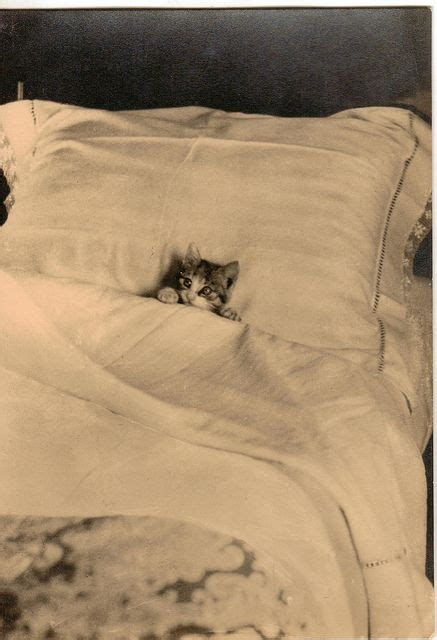 Tucked In Bed by Kitten Tucked In Bed Support Quot Southern California Cat