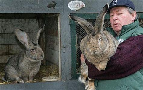 wann sind kaninchen ausgewachsen ist dieses bild echt oder gef 228 lscht kaninchen dickstes