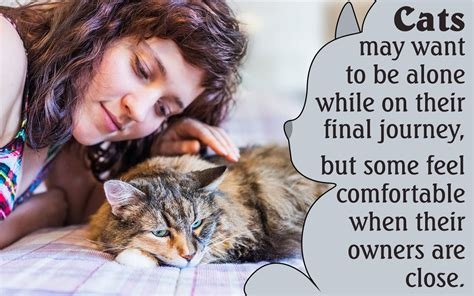 behavior before behavioral changes seen in cats before dying don t overlook them