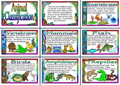 printable animal classification chart 25 best ideas about animal classification on pinterest
