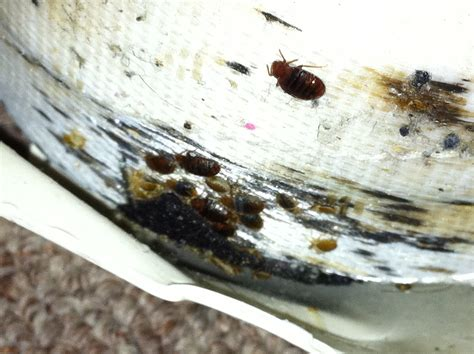 bed bug clean up man seeks community s help to fight bed bugs my cleaning