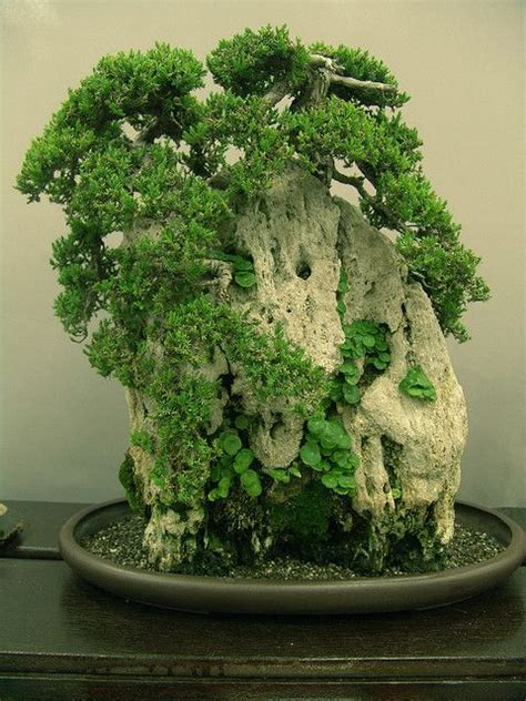 350 Best Bonsai Suiseki Scholar S Stone Images On Bonsai Rock Garden