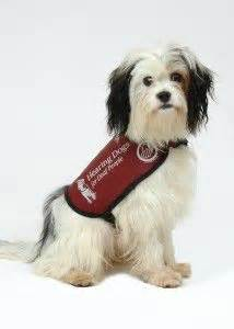 hearing dogs 1000 images about hearing dogs on dogs frank bruno and barrowman