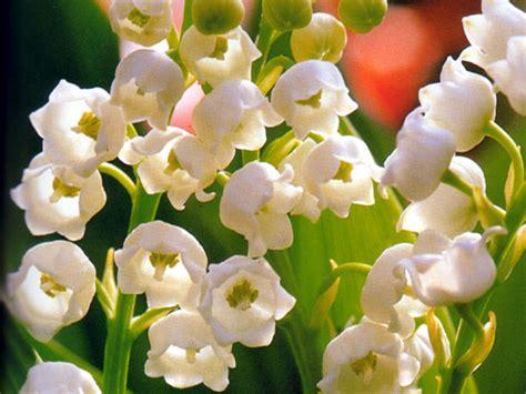 rom co dei fiori gefunden zu fiori auf http turistinviaggio it