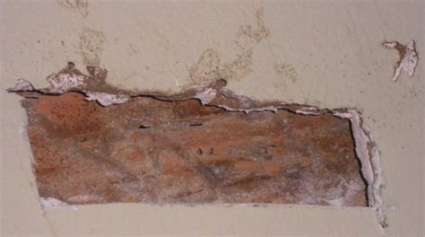 pest   eating  drywall home improvement stack