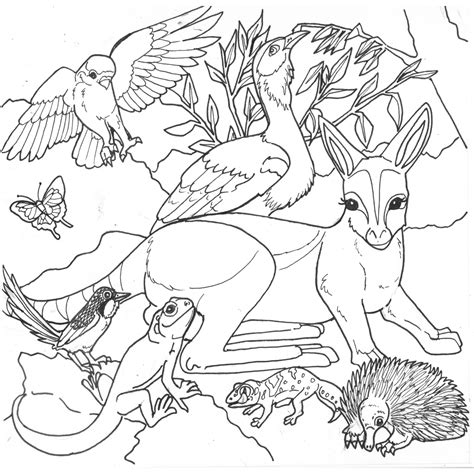 coloring page australian animals free coloring pages of australian desert