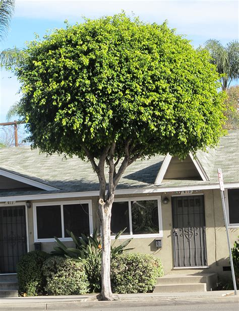 Houseplant For Low Light by Ufei Selectree A Tree Selection Guide