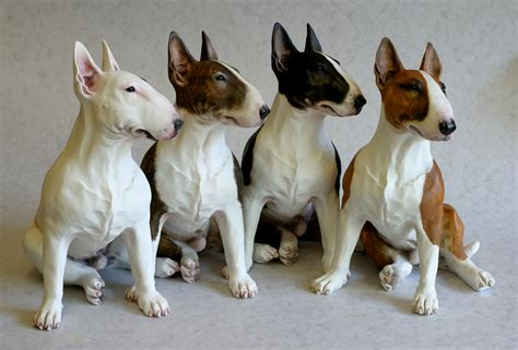 bull terrier saved by dogs bull terriers proof that god and perhaps the a sense of humor