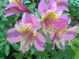 imagenes de flores que se reproducen asexualmente el cuerpo de las plantas ecured
