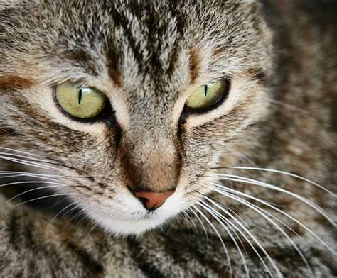 For Cats by Caring For Cats Kittens Uspca