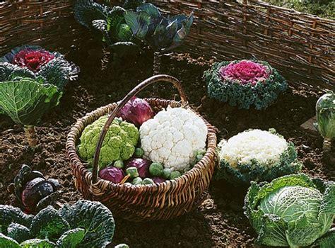 Plantation En Novembre Potager by Que Planter Au Potager En Novembre