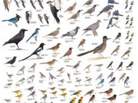 26 best images about backyard birding in so cal on