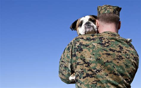 veteran dogs vets for vets how veterans can get free pet insurance for their service dogs