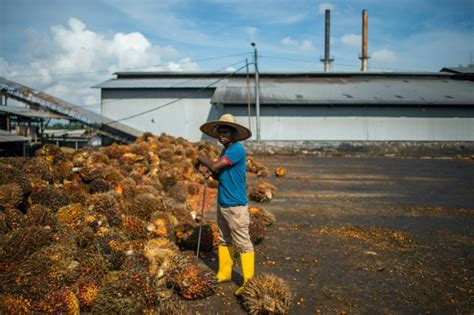 Bio Di Malaysia malaysia to press eu on planned palm ban in biofuels