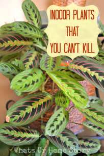 easy indoor flowers indoor plants that you just can t kill