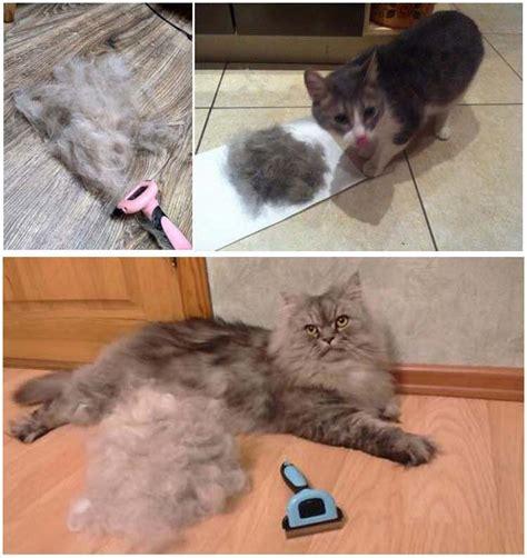 Sisir Anjing Kucing Hewan Peliharaan Grooming Sisir Anti Kutu sisir grooming bulu hewan membuat bulu hewan lebih rapi dan lembut tokoonline88