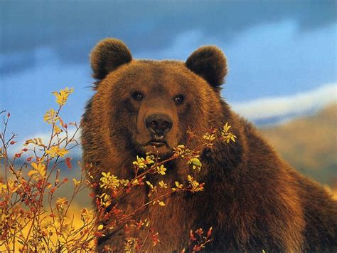 brown bear brown bear brown bear wallpapers animal literature