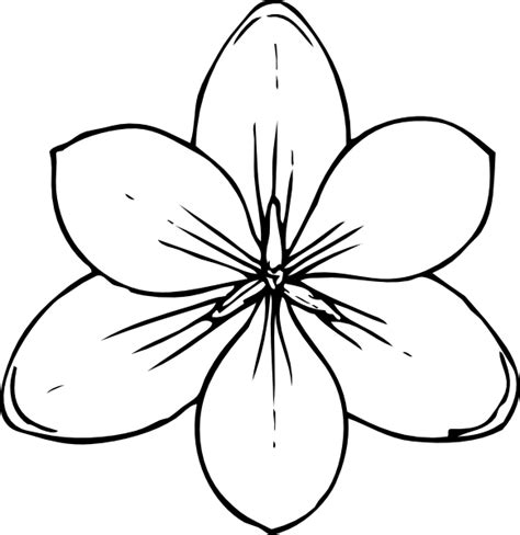 Crocus Flower Top View Clip Art At Clker Com Vector Clip Hawaiian Flower Template