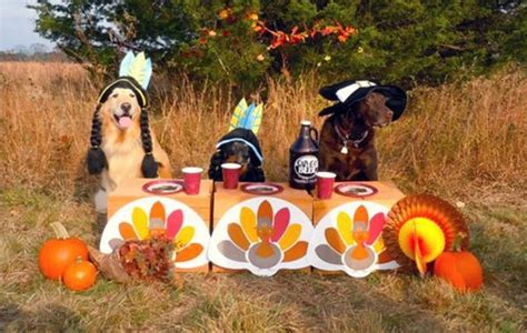 thanksgiving puppy how to keep your pets happy and healthy at thanksgiving